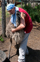 One of the emus